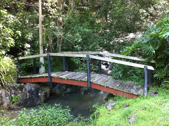 Amazing Wollumbin Palms Retreat at Mt Warning:                   The bridge below the water lodge