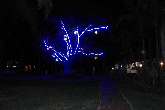 Swan Valley Oasis Resort: tree decorations