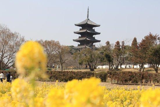 Bicchukokubunji Temple:                   春はすぐそこに