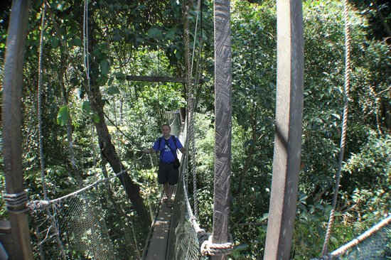 Canopy Walk & Poring Treetop Canopy Walk (Kota Kinabalu) - All You Need to Know ...