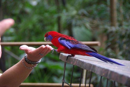 Bushwacker Ecotours:                                     Parrot