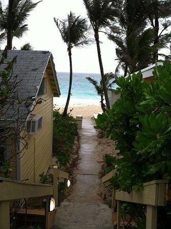 Sivananda Ashram Yoga Retreat:                                     Beach view                                  