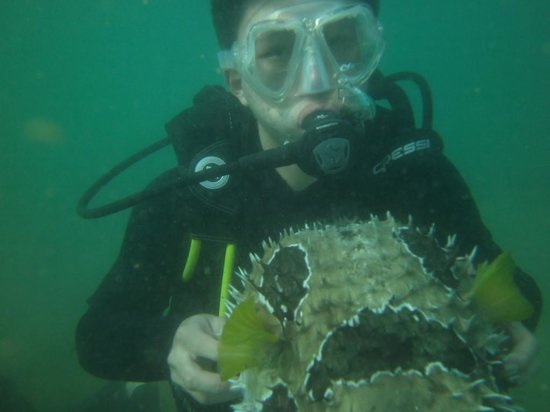 Weligama Bay Dive Center:                   Under water with fish