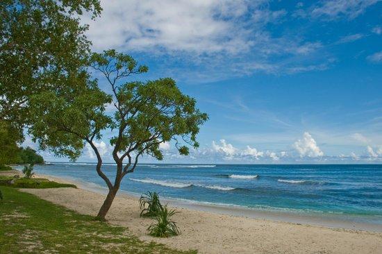 Efate, Vanuatu:                   beach