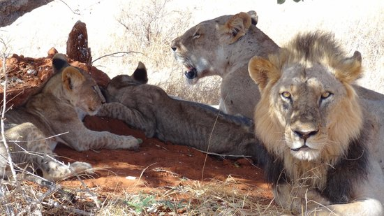 Thomas Tours & Safaris - Private Day Tours:                   leoni