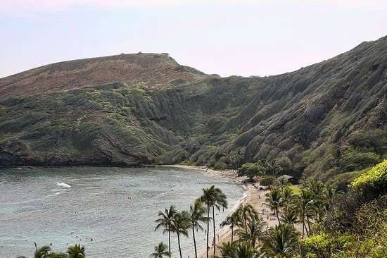 Discover Hawaii Tours:                   Discover Half Day Tour Oahu