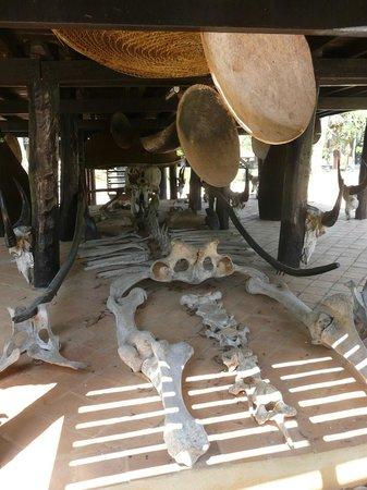 Baan Dam Museum:                                     Elephant bones!