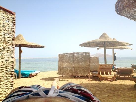 Sea Life Resort:                   sea life