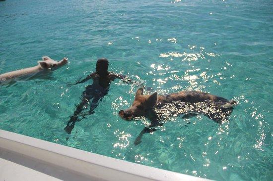 Paradise Bay Bahamas:                                     cays