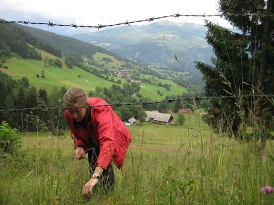 Altes Pfarrhaus: Picking wild strawberries at the end of our valley