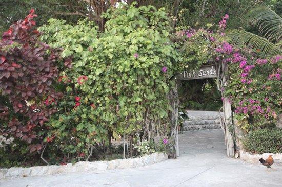 Pink Sands Resort:                                     entree de l'hotel pink sand