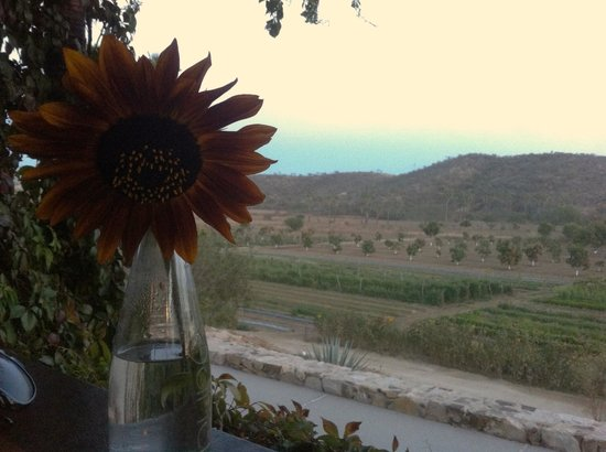 Organic Restaurant at Huerta Los Tamarindos:                   Tableside view at sunset