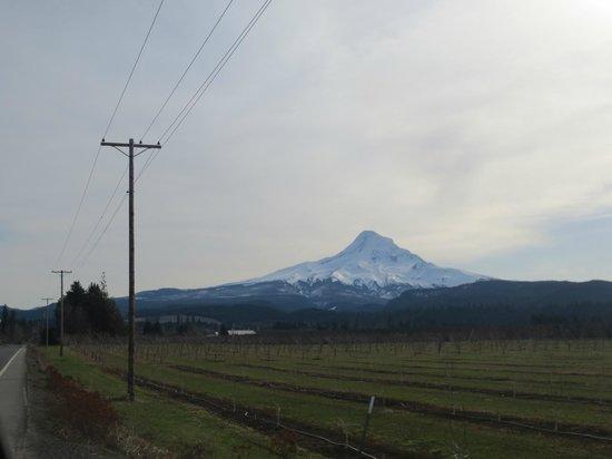 Mount Hood: View