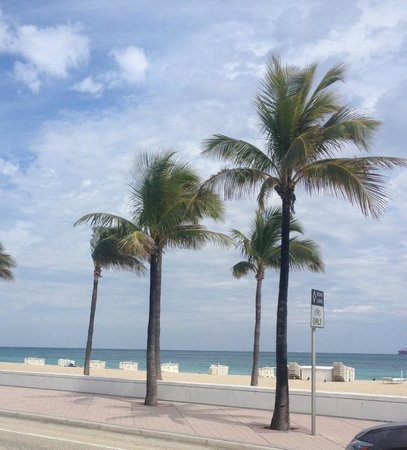 The Westin Beach Resort, Fort Lauderdale:                   Along the road outside the hotel