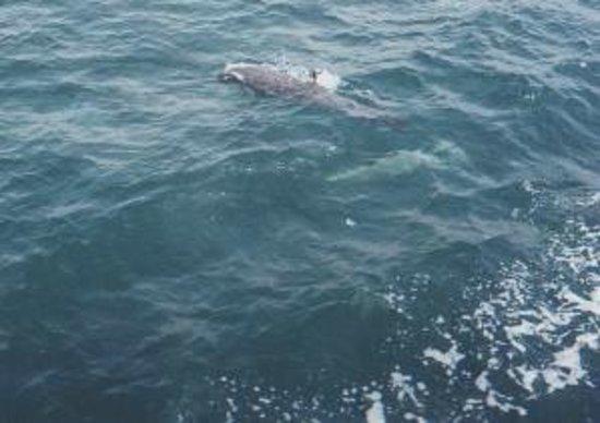 Nuevo Vallarta Beach:                   En el yate viendo Delfines...