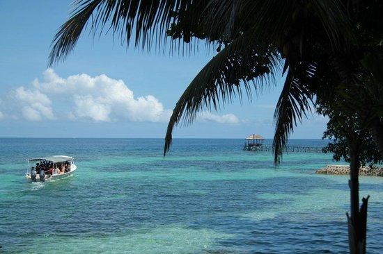 Black Marlin Dive Resort: :-)