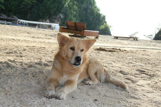 Black Marlin Dive Resort: One of the friendly Black Marlin dogs