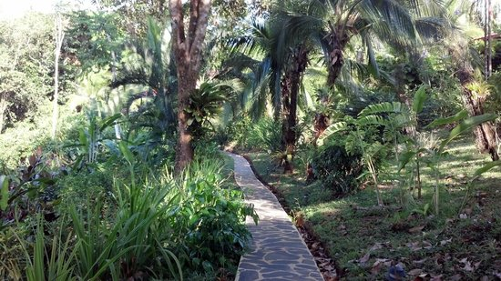 La Paloma Lodge:                   Walkway to main building.  Lots of scarlet macaw sitings along here.