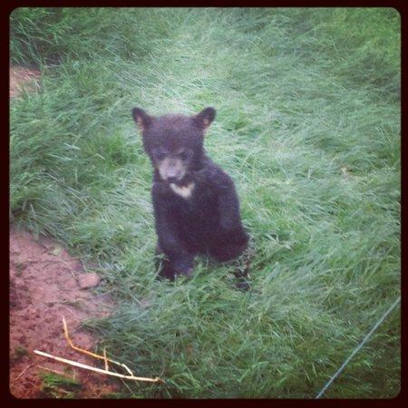 Bear Country USA:                   Lil sweetheart!