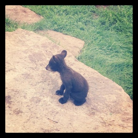Bear Country USA:                   Little guy!