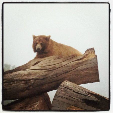 Bear Country USA:                   Look of enthusiasm...