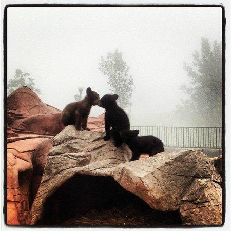 Bear Country USA:                   Bear kisses!