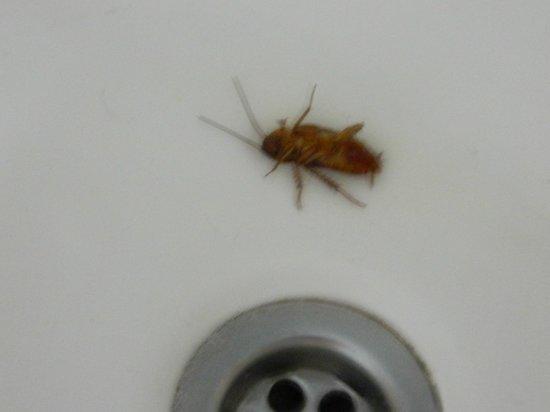 كاورا بالاس هوتل:                   found in bath                 