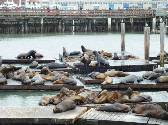 Fisherman's Wharf: Sea lion cafe...