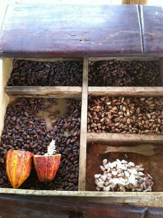 Rainforest Chocolate Tour:                   Fermentation