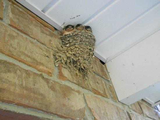 Wenzler's Landing Bed & Breakfast: Three barn swallows- ready to soar