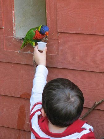 Riverbanks Zoo and Botanical Garden: Child feeding bird