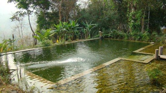 Zen Namkhan Boutique Resort :                   eco pool