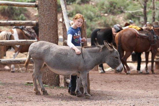 Foto de Black Mountain Ranch