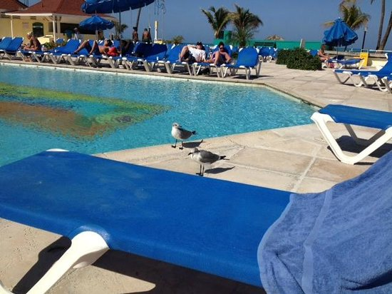 Breezes Resort & Spa Bahamas: Sea gulls...beware they are smarter than you