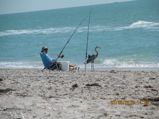 Weston's WannaB Inn:                   Great Blue Heron fishing