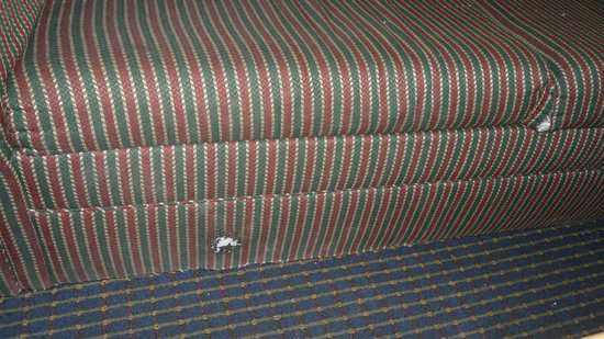 Howard Johnson Inn San Diego Hotel Circle:                   sofa