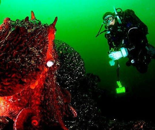 Ναναΐμο, Καναδάς: Octopus and Diver