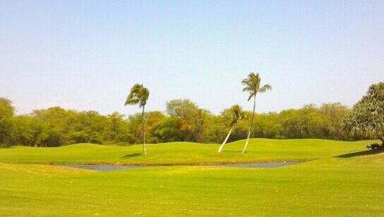 Hawaii Prince Golf Course:                                     Lots of beautiful palms and water