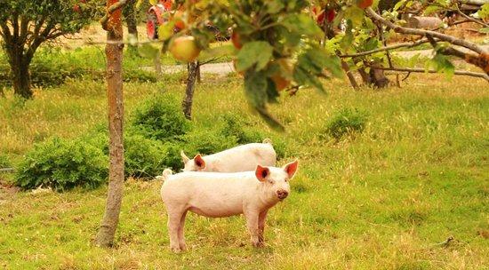 Antria Boutique Lodge: Die zwei kleinen Schweinchen...