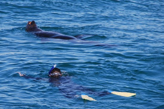 Moonraker Dolphin Swims:                   Snokelling with a seal