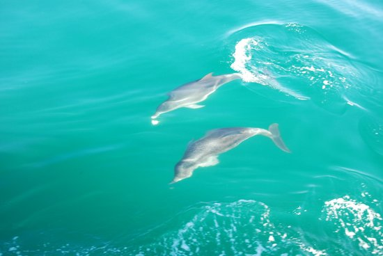 Moonraker Dolphin Swims:                   Mum and calf swimming together