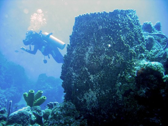 DiveLife: Dive in banco Chinchorro, and discover huge sponges