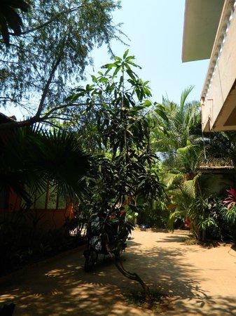 Villa Anjuna:                   нелегальный, но возможный (если нет сил дойти до номера пешком)))) вариант сто