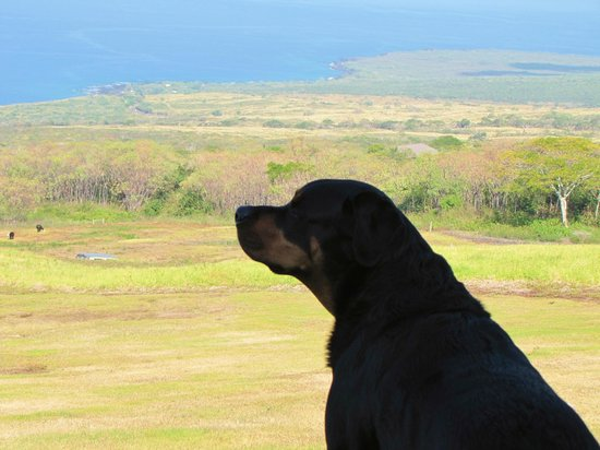Horizon Guest House: Bruno watches over his kingdom