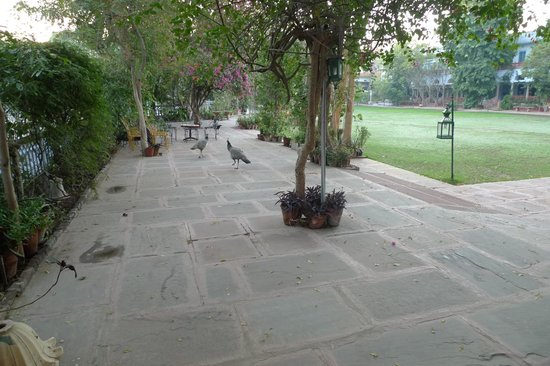Diggi Palace:                   Peacocks in the gardens