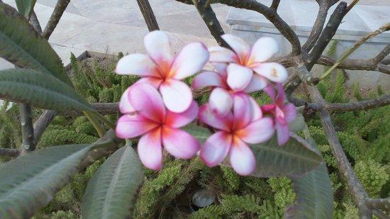 Baron Resort Sharm El Sheikh:                                     beautiful flowers around the hotel grounds