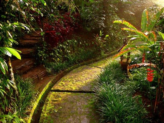 Munduk Moding Plantation: Pathway
