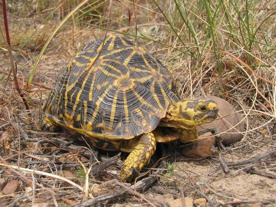 Bartholomeus Klip Farmhouse : Geometric Tortoise
