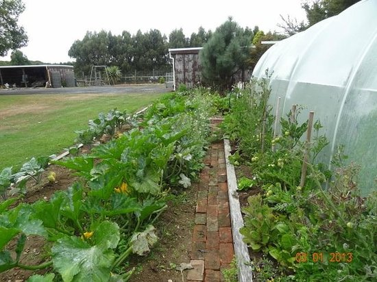 Last Light Cafe : Organic vegetable garden and greenhouse