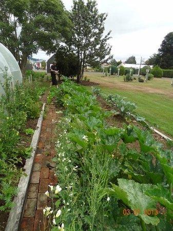Last Light Cafe: Organic vegetable garden